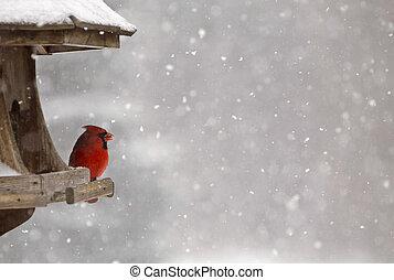 鳥フィーダー, 枢機卿