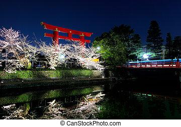 鳥居, sakura, 夜