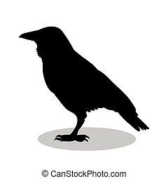 鳥, シルエット, 黒, ワタリガラス, 動物