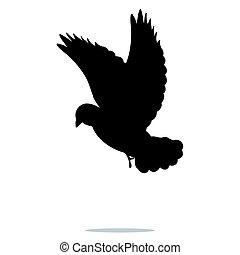 鳥, ハト, 黒, シルエット, 動物