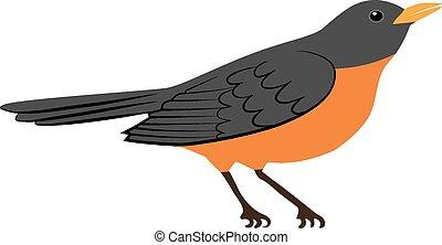 鳥, ロビン