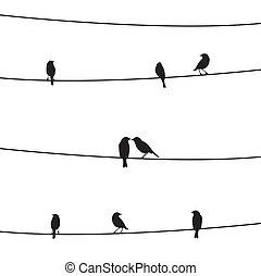 鳥, 上, the, wire1