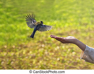 鳥, 供給, autumn.