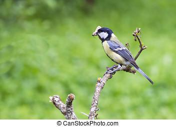鳥, 在一個分支上