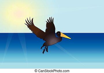 鳥, 浜, ペリカン