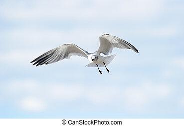鳥, 翅膀