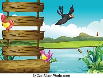 鳥, 近くに, a, ブランク, 木製である, signage