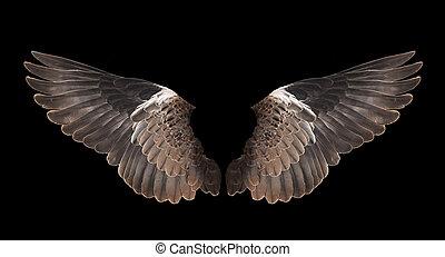 鳥, 黒, 隔離された, 背景, 翼