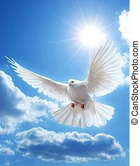 鳩, 空中に, ∥で∥, 翼, 十分に開いた