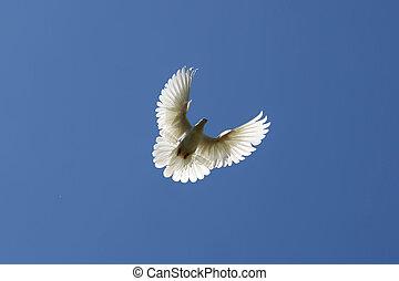 鳩, 空気