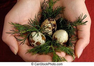 鵪鶉, 蛋, 2