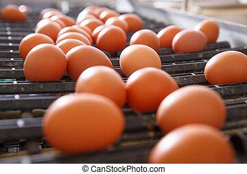 鶏, コンベヤー, 新たに, ベルト, 卵, 未加工