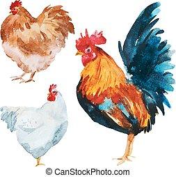 鶏, 水彩画