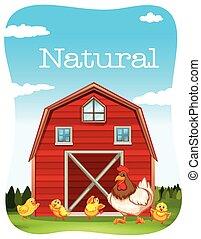 鶏, 納屋, 赤