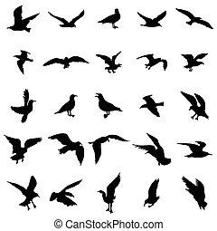 鷗, 黑色半面畫像, 集合