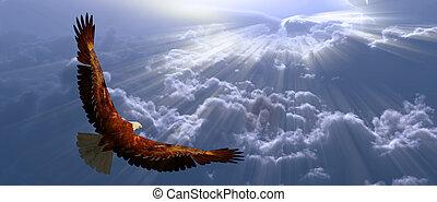 鷹, 在飛行中, 上面, tyhe, 云霧