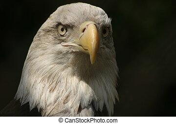 鷹, 注意