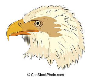 鷹, 頭, 被隔离, 在懷特上, 背景