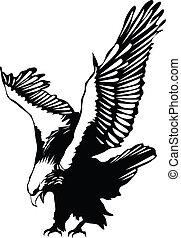 鷹, 飛行