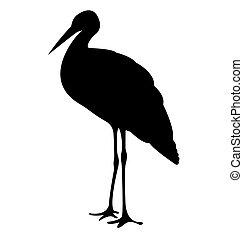 鸛, 鳥, 黑色半面畫像