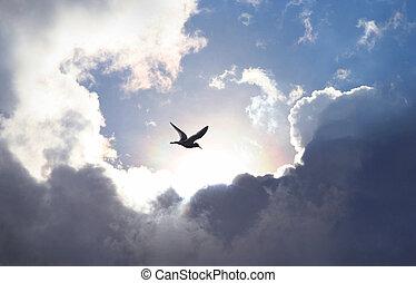鸟飞行, 在中, the, 天空, 带, a, 戏剧性, 云形成, 在中, the, 背景。, 光, 发光, 水槽,...