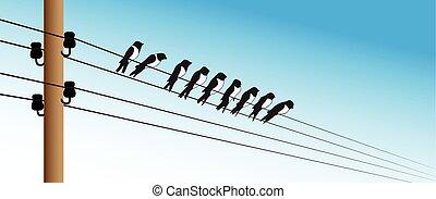 鸟, 在上, a, 电线