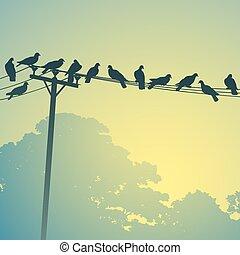 鸟, 在上, a, 线