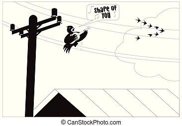 鸟, 有趣, 描述