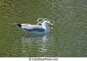 鸥, 抓住, 在中, 塑料, 污染