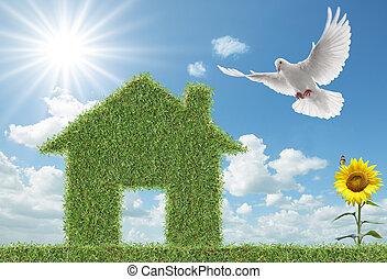 鸽, 同时,, 绿色的草, 房子