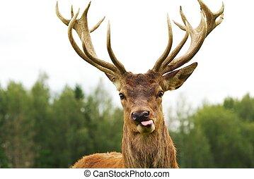 鹿, クローズアップ