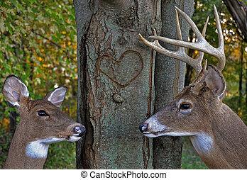 鹿, 中に, 森