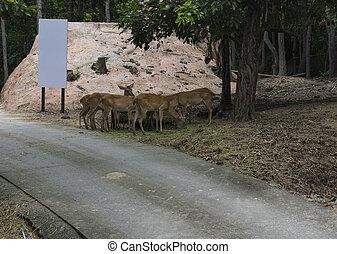 鹿, 女性, 動物園