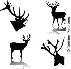 鹿, 影, シルエット