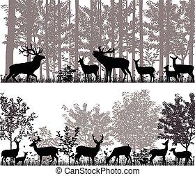 鹿, 牧群