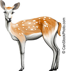 鹿, 被隔离