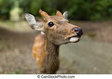 鹿, 關閉