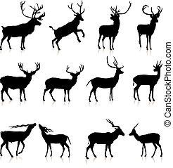 鹿, 黑色半面畫像, 彙整