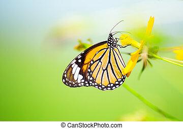 黃色的蝴蝶