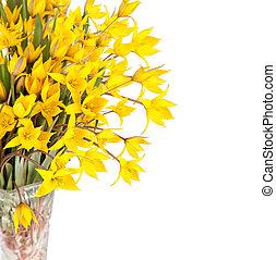 黃色的郁金香, 花, 在, 玻璃瓶, 被隔离, 在懷特上, 背景