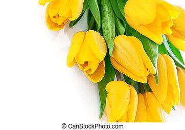 黃色的郁金香, 花, 由于, 綠葉