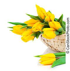 黃色的郁金香, 花, 花束, 被隔离, 在懷特上, 背景