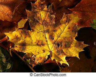 黃色, 秋季离去