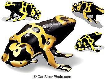 黃色, 結合, 毒物, 青蛙, 飛奔