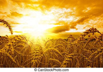 黃金般的日落
