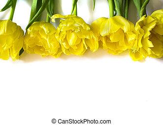 黄色いチューリップ, 背景, 白い花, 横列