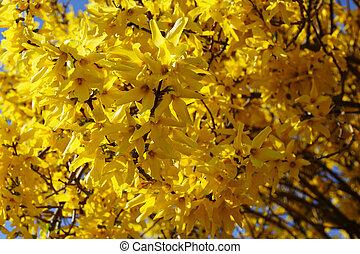 黄色の背景, 春, 美しい, 花