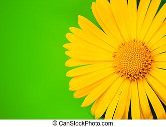 黄色の花, クローズアップ, 打撃