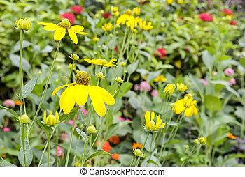 黄色的花, 在花园
