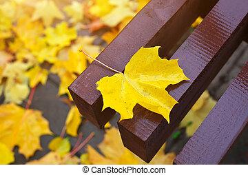 黄色, ぬれた, かえで 葉, 上に, ∥, 木製のベンチ, 中に, ∥, 秋, park.